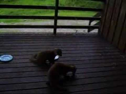 Pine Martens Eating Doughnuts