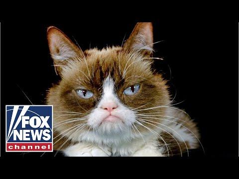 DJ Taylor - Internet Star Grumpy Cat Passes At Age 7