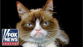 grumpy-cat-beloved-meme-sensation-dies-at-age-7