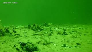 Crosstour CT8000 - Chatham Marina Underwater 2