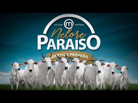 Lote 02   Famosa FIV Nelore Paraíso   MRJP 484 Copy