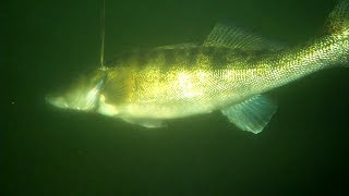 Подводная охота Судак. Spearfishing(Spearfishing Записки охотника., 2009-11-12T20:51:27.000Z)