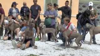 2° Raduno Weimaraner Rescue Italia Wri   24 Maggio 2015