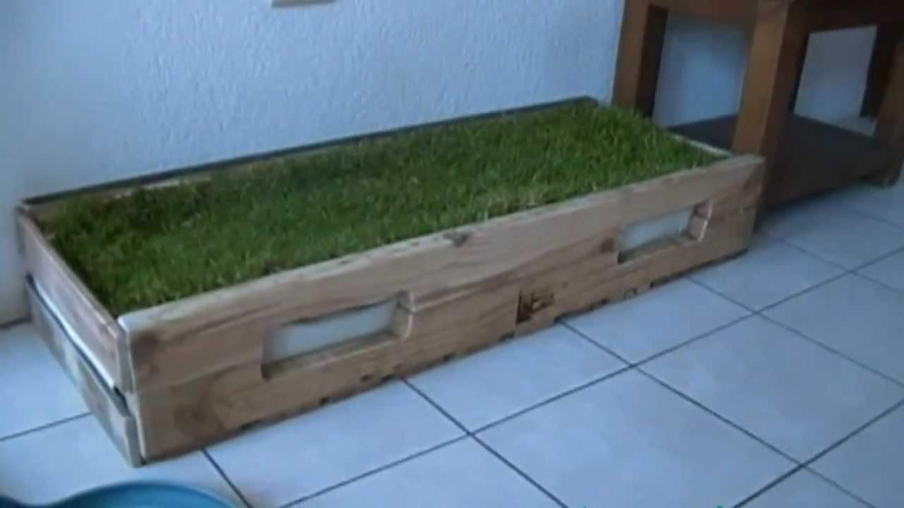 greenpet jardinera para mascota de interior y exterior