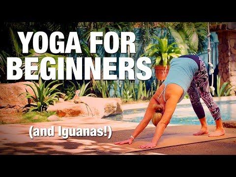 Yoga for Beginners Yoga Class - Five Parks Yoga (Bonus Iguana Visit!)
