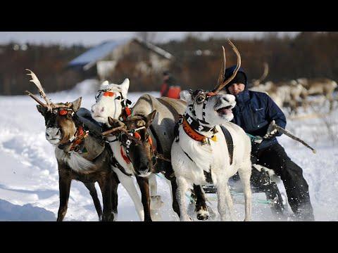 Спорт народов Крайнего Севера. Ямало-ненецкий автономный округ
