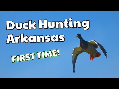 Arkansas Duck Hunt With Freelance Duck Hunting (Part 1)