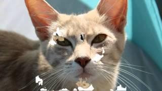 домик для кошки купить украина