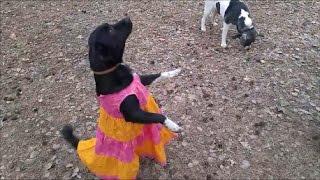 Видео с СОБАКАМИ для детей - Собака ТАНЦУЕТ - Прикольные видео про животных