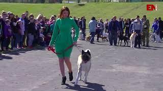 В Энергодаре прошла выставка собак
