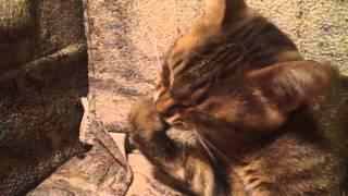 Кот рвет когти