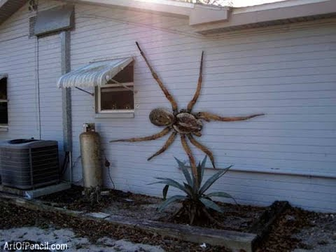 Are There Giant Spiders Living In The Congo?