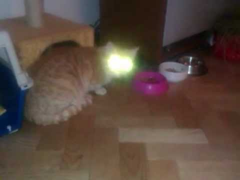 My Cats Eyes Glow Red