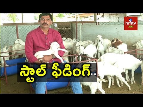 Goat Farming Guide By Purnachander Reddy | hmtv Agri