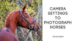 Camera Settings To Photograph Horses