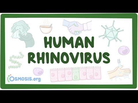 Rhinovirus - Causes, Symptoms, Diagnosis, Treatment, Pathology