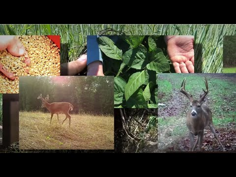 How We Changed An Old Rocky Farm Into A Deer Hunting Dream (#500) @GrowingDeer.tv