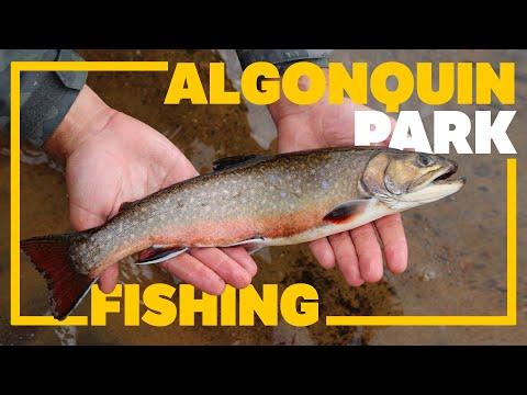 ROCK LAKE ALGONQUIN PARK FISHING & CAMPING