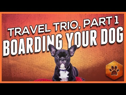 Dog Boarding - Holiday Pet Travel (1 of 3)