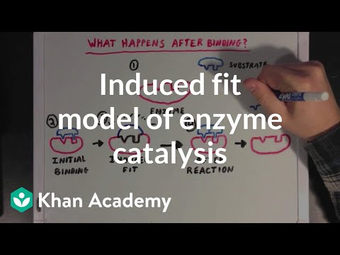 Induced fit model of enzyme catalysis | Chemical Processes | MCAT | Khan Academy