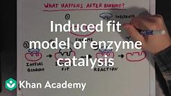 WGU Biochemistry - YouTube