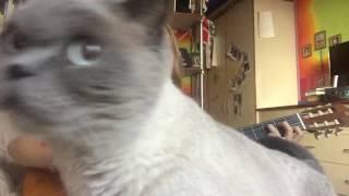 Люблю кота,а он меня нет)