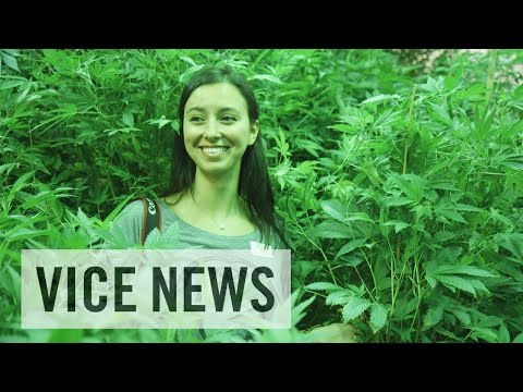 This Week On The Line: Nilo Tabrizy Discusses the Business of Weed