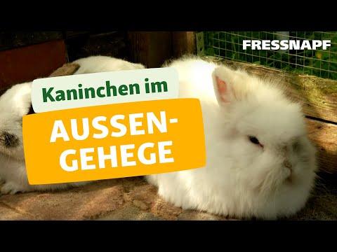 kaninchen im au engehege i fressnapf youtube