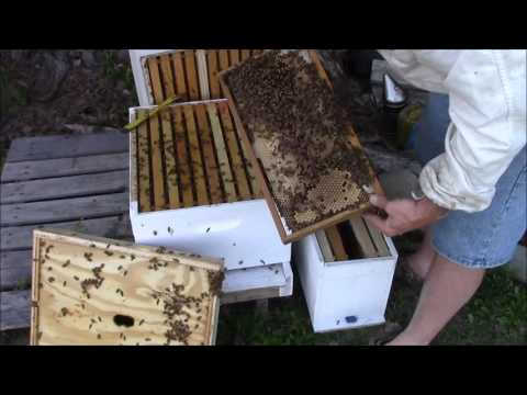 DETAILED Video about a Failing/Bad queen. How to tell you have one