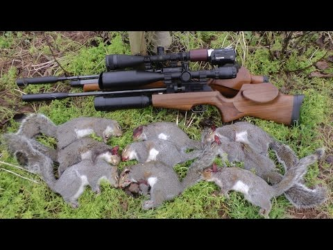 Pest Control with Air Rifles - Squirrel Shooting - The Plank pt 2