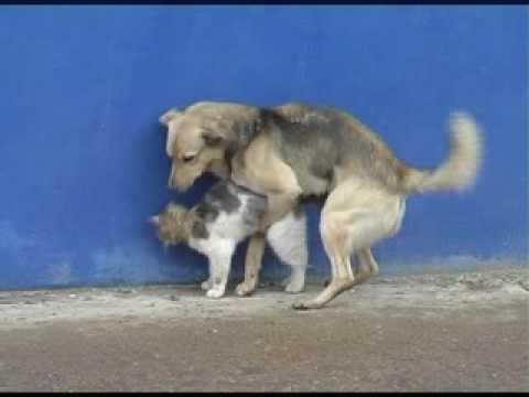 собака насилует кошку
