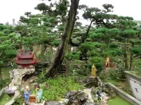 Vườn tùng, đồi tùng, cây tùng, sanh, tiểu cảnh, phong thuỷ cơ sở Ngọc Xuân
