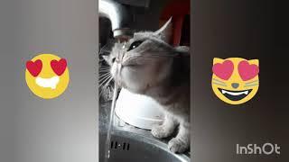 Смешная кошечка милые животные смешное видео funnyvideo
