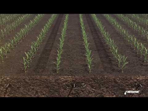 Subsurface drip irrigation for corn by Netafim