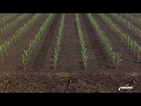 Subsurface Drip Irrigation For Corn By Netafim