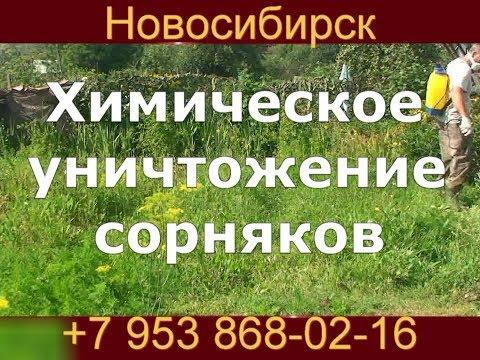 Гербицидная обработка участка уничтожение сорняков. Покос травы в Новосибирске