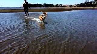 Beagles Running On The Beach In Slo-mo