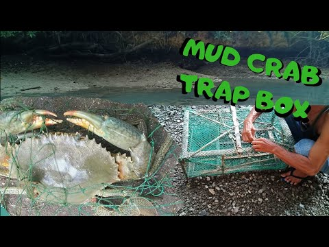 how-to-catch-a-mud-crab-|-trap-box-fish-net-|-native-fishing-method-|