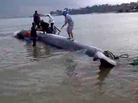 Baleine a sidi bou said tunisie