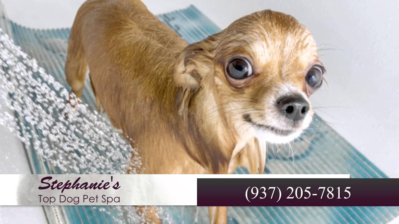 Stephanies top dog pet spa pet groomers in hillsboro youtube stephanies top dog pet spa pet groomers in hillsboro solutioingenieria Images
