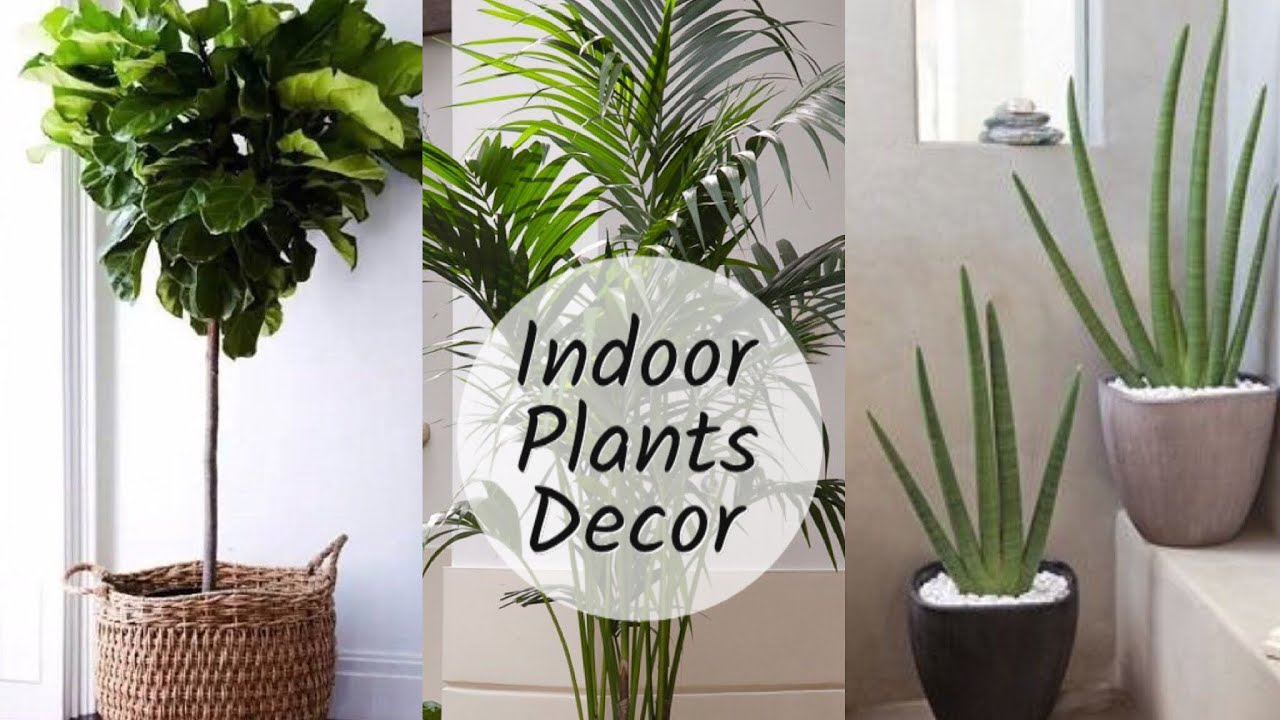 Home Decoration With Plants || Best Indoor Plants In India For ...