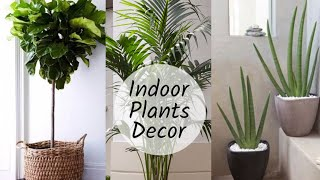 Home Decoration With Plants || Best Indoor Plants In India For Decoration
