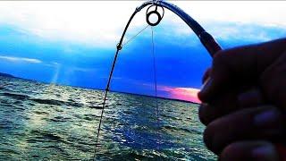 Ловля Сома на Квок Рыбалка на Сома Сом на Квок Как поймать Сома на Квок