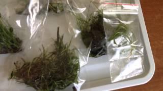 Аквариумные растения(http://aquaclean.kiev.ua/ http://www.aquaworld.com.ua/, 2015-01-03T22:12:28.000Z)