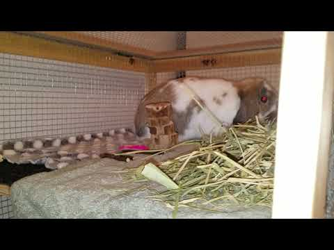 DIY Home Rabbit Hutch