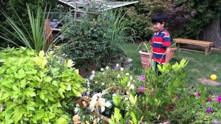 Beautiful Flower Bed: Under $10 Garden Box Two Months Later - Gardening Ideas Made Simple By Aiman