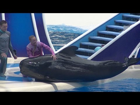 Blue Horizons w/ Pilot Whales (Full Show/Full HD) Aug 17 201