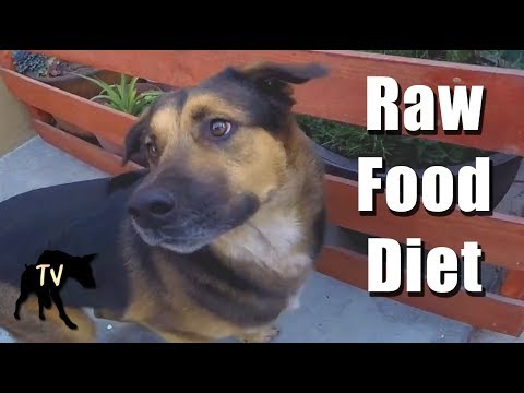 What our dogs eat in a Day | Raw Feeding Vlog