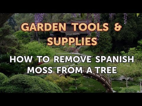 How To Remove Spanish Moss From A Tree You