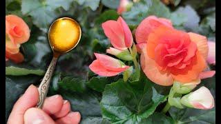 Цветущий сад дома! Подкормите домашние цветы этим!